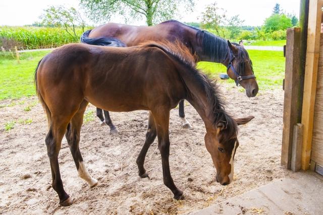 競走馬の親子の画像
