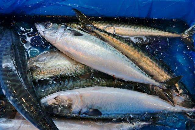 魚屋のサバの画像