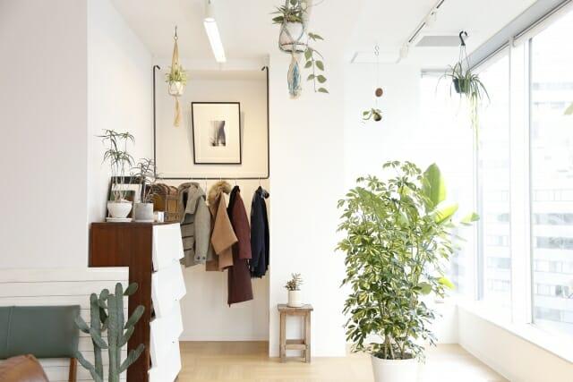 植物とおしゃれな部屋の画像